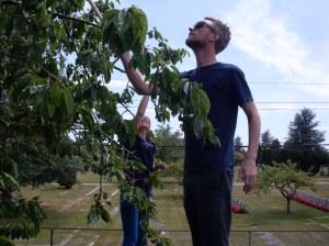Picking picking picking ...