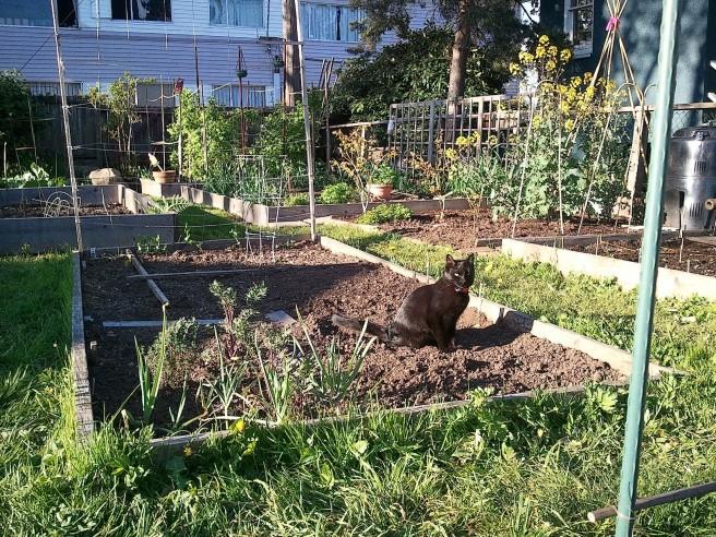 Garden cat, sunlit.