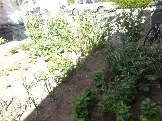 The back part of the garden