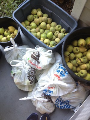 Quince haul